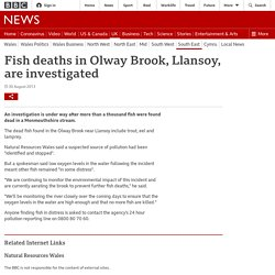 Fish deaths in Olway Brook, Llansoy, are investigated