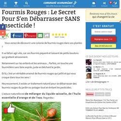 Fourmis Rouges : Le Secret Pour S'en Débarrasser SANS Insecticide !