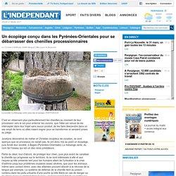 Un écopiège conçu dans les Pyrénées-Orientales pour se débarrasser des chenilles processionnaires