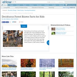 info_10046268_deciduous-forest-biome-kids