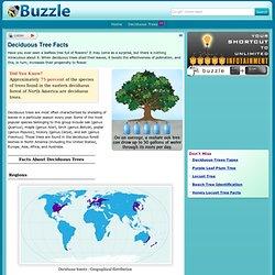 Deciduous Tree Facts