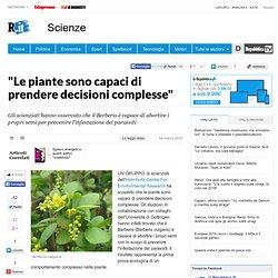 """""""Le piante sono capaci di prendere decisioni complesse"""""""