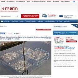 LE MARIN 03/06/13 Risque de déclassement pour une vingtaine de zones de production de coquillages en France