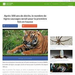 Après 100 ans de déclin, le nombre de tigres sauvages serait pour la première fois en hausse
