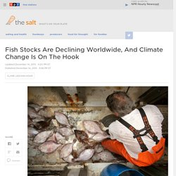 Fish Stocks Are Declining Worldwide, And Climate Change Is On The Hook