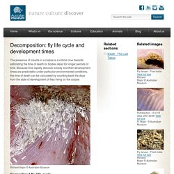 Decomposition: fly life cycle and development times