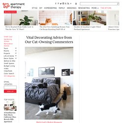 Decorating Advice for Cat Owners