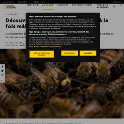 Découverte d'une abeille mutante à la fois mâle et femelle