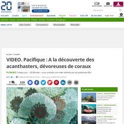 VIDEO. Pacifique : A la découverte des acanthasters, dévoreuses de coraux 2 juillet 2020