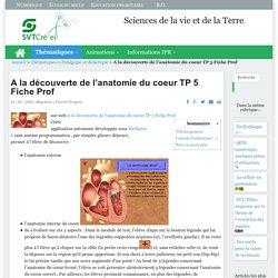 A la découverte de l'anatomie du coeur TP 5 Fiche Prof