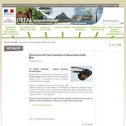 DREAL BASSE NORMANDIE 26/09/11 Découverte du Frelon asiatique en Basse-Normandie