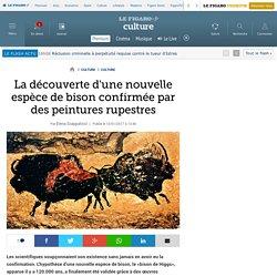 La découverte d'une nouvelle espèce de bison confirmée par des peintures rupestres