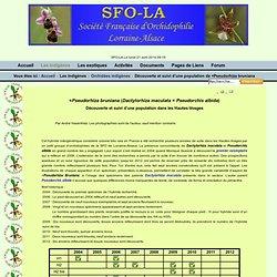 SFO-LA - Découverte et suivi d'une population de ×Pseudorhiza bruniana