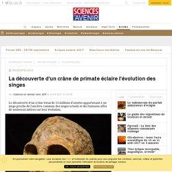 La découverte d'un crâne de primate éclaire l'évolution des singes - Sciencesetavenir.fr