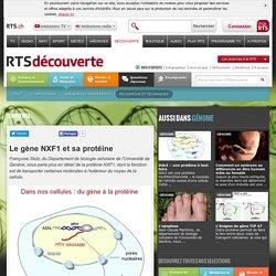 Le gène NXF1 et sa protéine - rts.ch - découverte - santé et médecine - recherche et techniques - génome