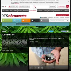 découverte - santé et médecine - maladies et traitements - cannabis