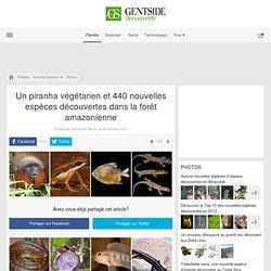 Un piranha végétarien et 440 nouvelles espèces découvertes dans la forêt amazonienne