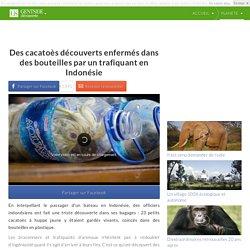 Des cacatoès découverts enfermés dans des bouteilles par un trafiquant en Indonésie