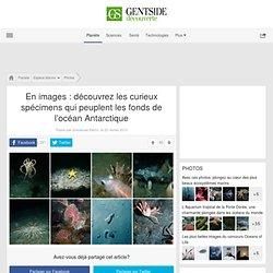 Photos - En images : découvrez les curieux spécimens qui peuplent les fonds de l'océan Antarctique