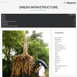 How Deep Do Tree Roots Really Grow?