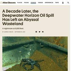 A Decade Later, the Deepwater Horizon Oil Spill Has Left an Abyssal Wasteland