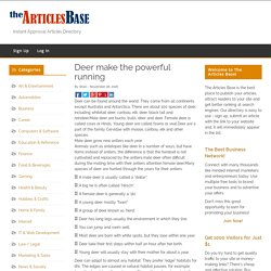 Deer make the powerful running – The Articles Base