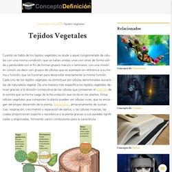 ¿Qué es Tejidos Vegetales? » Su Definición y Significado [2020]