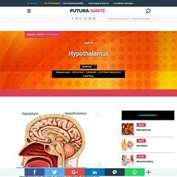 Définition Hypothalamus Futura Santé