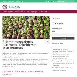 Bulbes et autres plantes tubéreuses - Définitions et caractéristiques