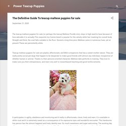 The Definitive Guide To teacup maltese puppies for sale