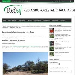Cómo impacta la deforestación en el Chaco – Red Agroforestal Chaco Argentina