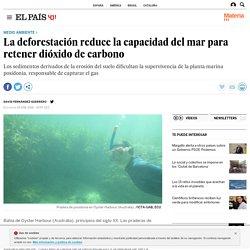 La deforestación reduce la capacidad del mar para retener dióxido de carbono