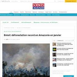 Brésil: déforestation record en Amazonie en janvier