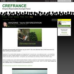 AMAZONIE - Vache DEFORESTATION