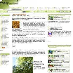 Déforestation et huile de palme : deux facteurs d'émissions de CO2 en Asie du Sud