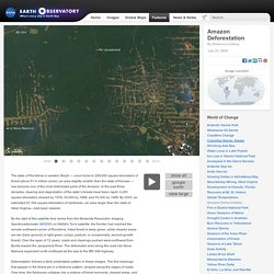 World of Change: Amazon Deforestation : Feature Articles