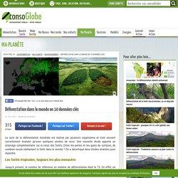 Déforestation dans le monde en 10 données clés