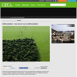 Déforestation : tout savoir sur la déforestation