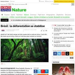 Brésil : la déforestation se stabilise - 27 novembre 2014
