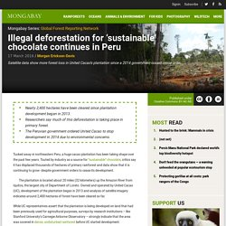 Illegal deforestation for 'sustainable' chocolate continues in Peru