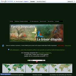 Déforestation : Les forêts vierges tropicales, l'Amazonie, l'Afrique, l'Asie...