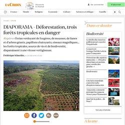Déforestation, trois forêts tropicales en danger