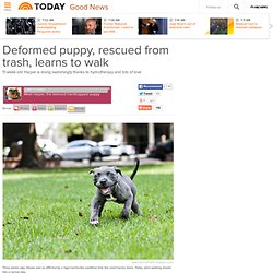 Deformed puppy, rescued from trash, learns to walk