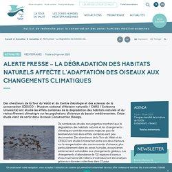Alerte presse - La dégradation des habitats naturels affecte l'adaptation des oiseaux aux changements climatiques - Tour du Valat