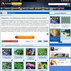 Diaporama > Les délicieuses herbes aromatiques et leurs vertus
