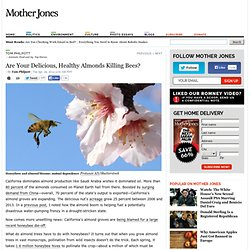 Are Your Delicious, Healthy Almonds Killing Bees?