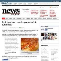 Delicious idea: maple syrup made in Kimberley|News in the Kootenays