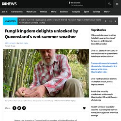 Fungi kingdom delights unlocked by Queensland's wet summer weather