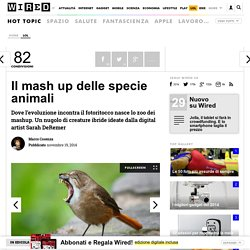Il mash up delle specie animali
