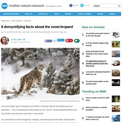 8 demystifying facts about the snow leopard